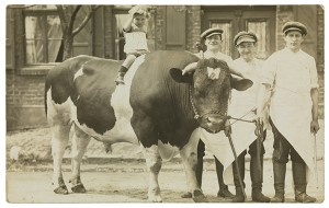 Photograph: A boy on a bull