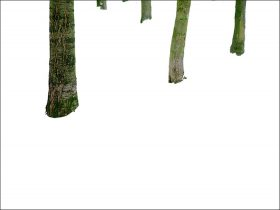Five trees in front of a white background