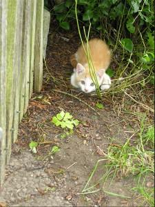 Eine kleine Katze sitzt geduckt im Gras neben einem Zaun.