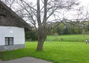 Haus mit Baum und Wiese