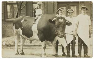 Schwarz-weiß Fotografie: Ein kleiner Junge auf einem Stier