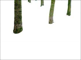 Fünf Baumstämme vor weißem Hintergrund