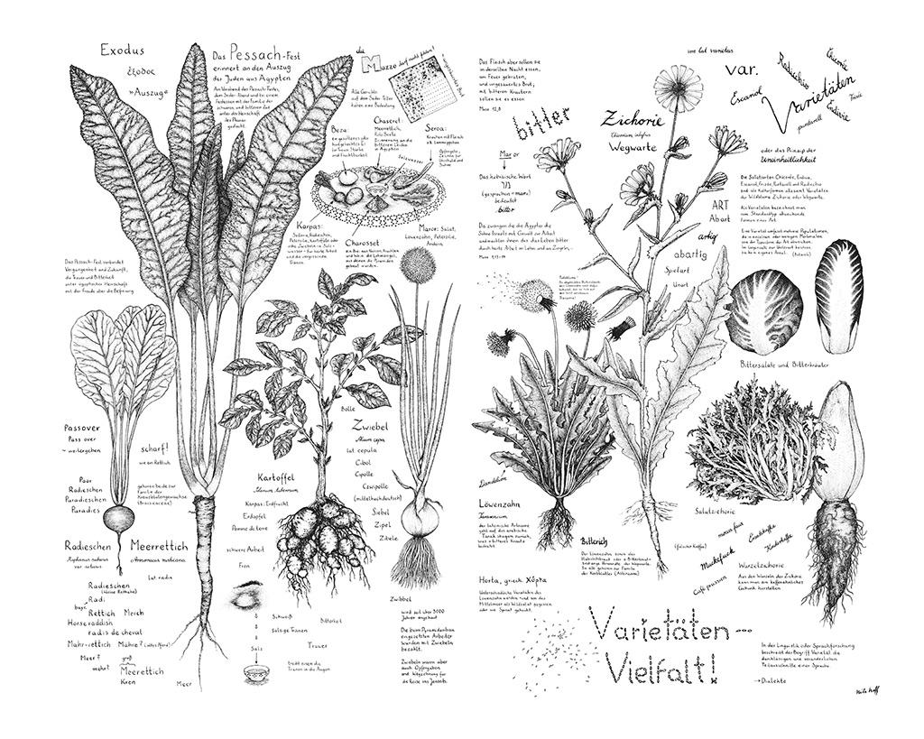 Zeichnungen von Kräutern und Salaten mit Beschriftung und Informationen zu den Pflanzen und zum Pessach-Fest