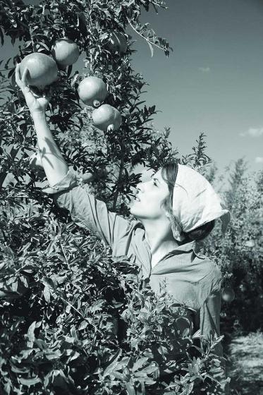 Schwarz-Weiß-Fotografie einer jungen Frau im Profil. Sie pflückt einen Granatapfel von einem Baum. Der Granatapfel ist linksoben im Bild, die Frau steht rechtsunten. Granatapfel, ausgestreckter Arm und Blickrichtung der Pflückerin bilden eine Diagonale