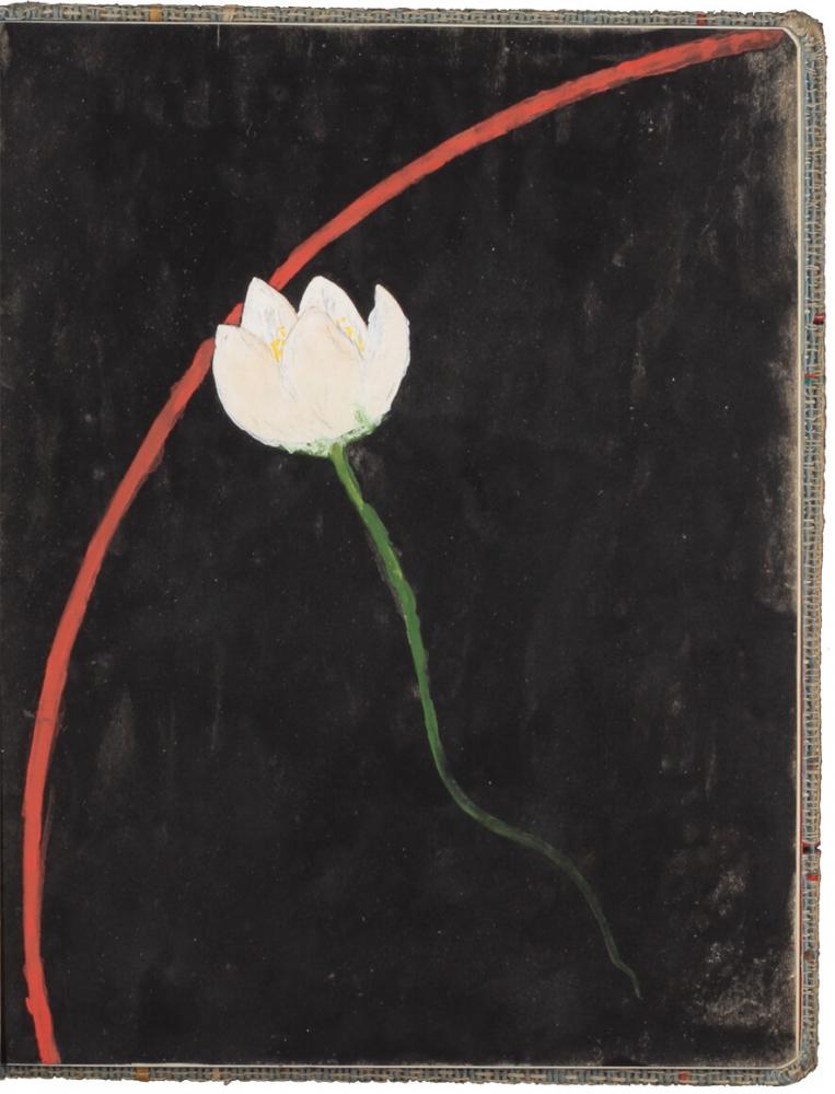 Blume mit weißer Blüte, auf schwarzem Grund, eine rotfarbige konkave Membran durchbrechend