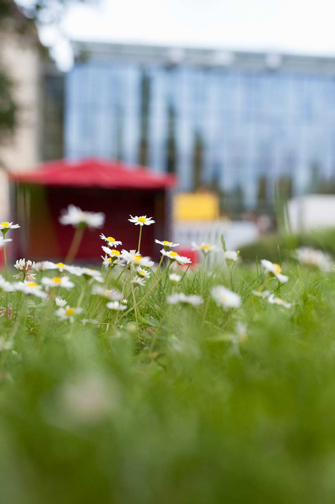 Photography: Daisies in the foreground, the glass courtyard of the Jewish Museum Berlin unfocused in the background