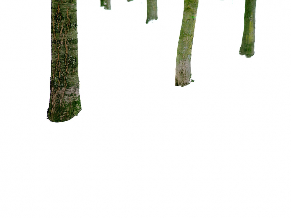 The ends of wooden branches that are green with moss appear to be floating in a white empty space