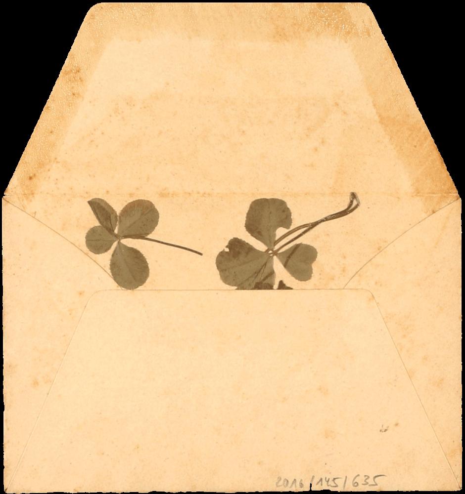Vergilbter geöffneter Umschlag, in dem zwei gepresste vierblättrige Kleeblätter liegen.