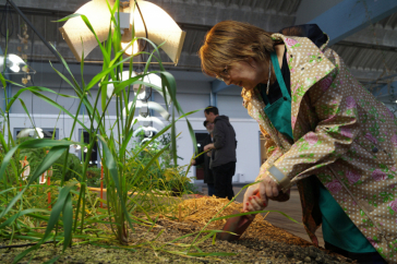 Woman working on plants in a bed in an indoor garden