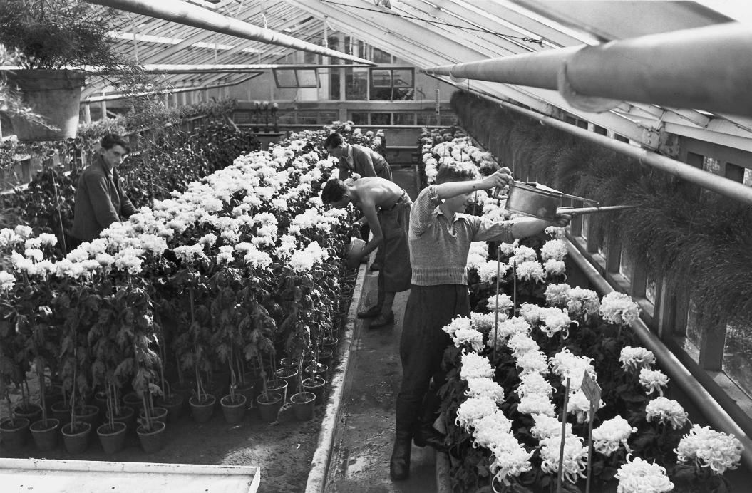 Gewächshaus mit Blumen und Menschen