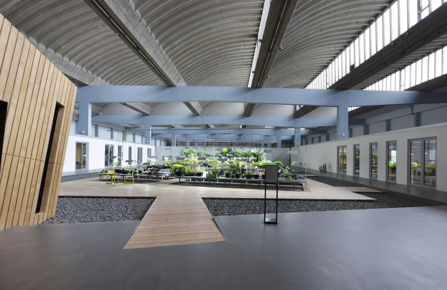A path leads to large green indoor garden on wooden floor island surrounded by a sea of small gray rocks