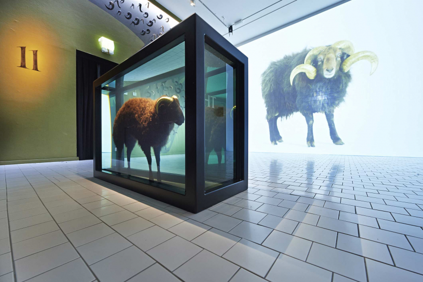 A ram is floating in a large glass tank of liquid, the wall opposite the tank projects an image of a ram