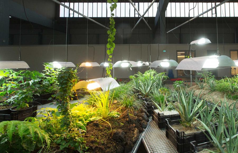 Plusieurs plantes sur parterres et en pots dans une halle
