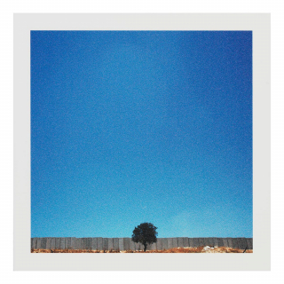 Vintage photograph of a single tree in the middle of a fence, surrounded by an enormous clear blue sky