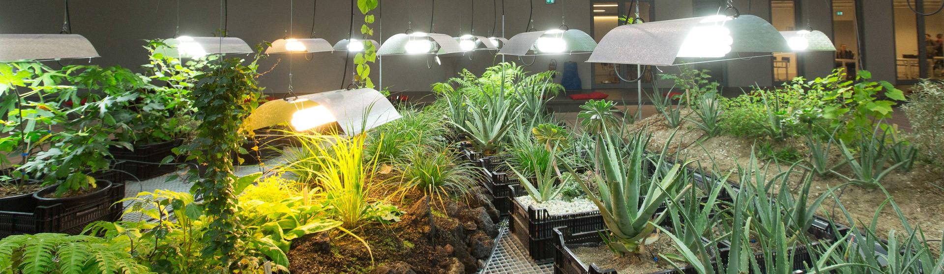 Der garten der diaspora j disches museum berlin for Berlin pflanzen